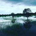 Wet season in Kakadu! #kakadunationalpark #kakadu #wetseason #northernterritory #westarnhem #billabong