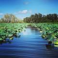 The pathway to paradise! #kakadu #kakadunationalpark #westarnhemland #westarnhem