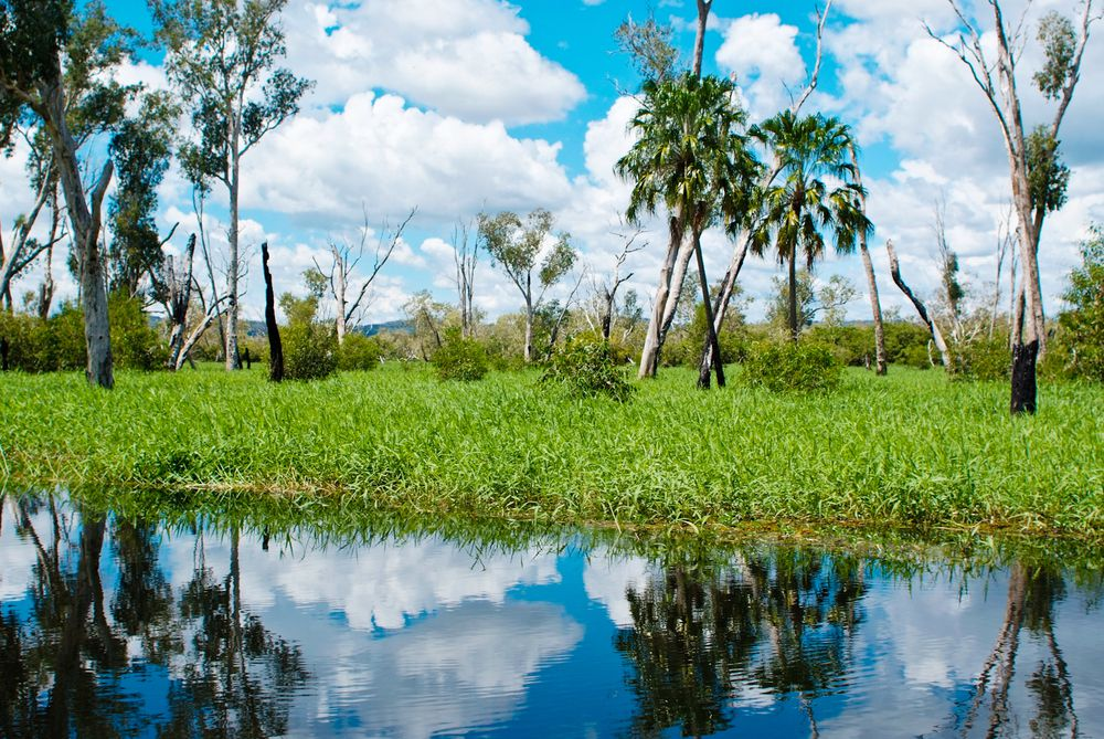 The Magela wetlands in Kakadu host an abundance of bush tucker.